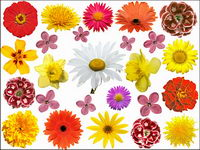 Picture colorful flower material