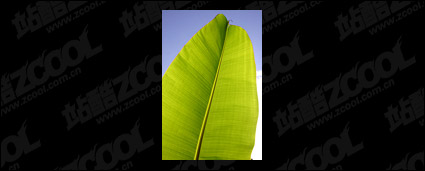 Leaf quality picture material-4